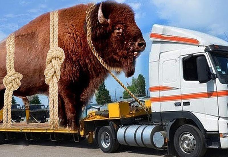 Самые большие животные, в существование которых невозможно поверить