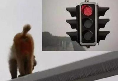 """Китаянка перепутала зад обезьяны с красным сигналом светофора и попала в аварию <span class=""""color_red"""">- ФОТО</span>"""