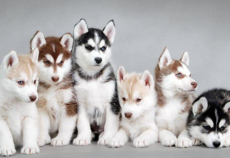 7 самых дорогих собак в мире
