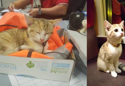 Во Франции котенок пристал к проводнику. Тот покатал его на поезде и помог найти хозяйку