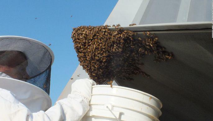 ВСША устроили геноцид русских  пчел