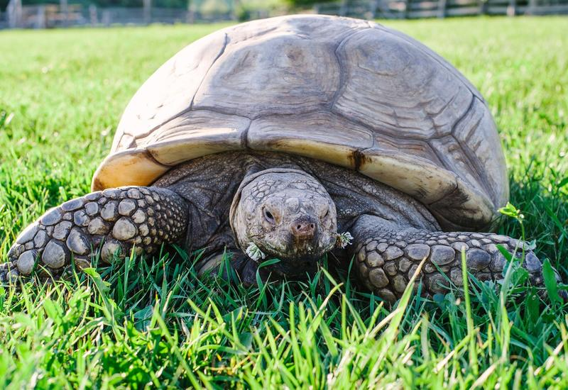 Американец получил полгода тюрьмы за любовь к черепахам