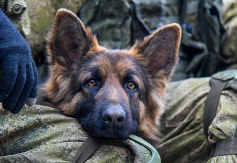 Что-то пошло не так: в США мужчина при аресте покусал полицейскую собаку