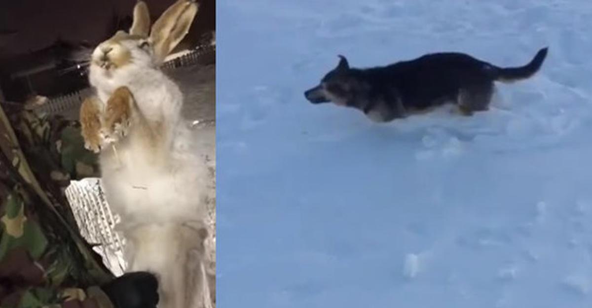 Животные замерзают находу из-за холодов вКазахстане