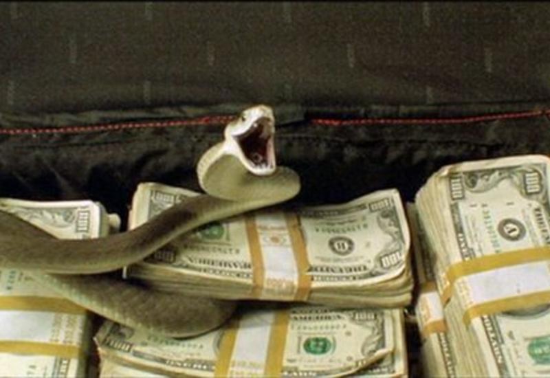 """Змея """"проглотила"""" многомиллионную выручку нигерийских чиновников"""