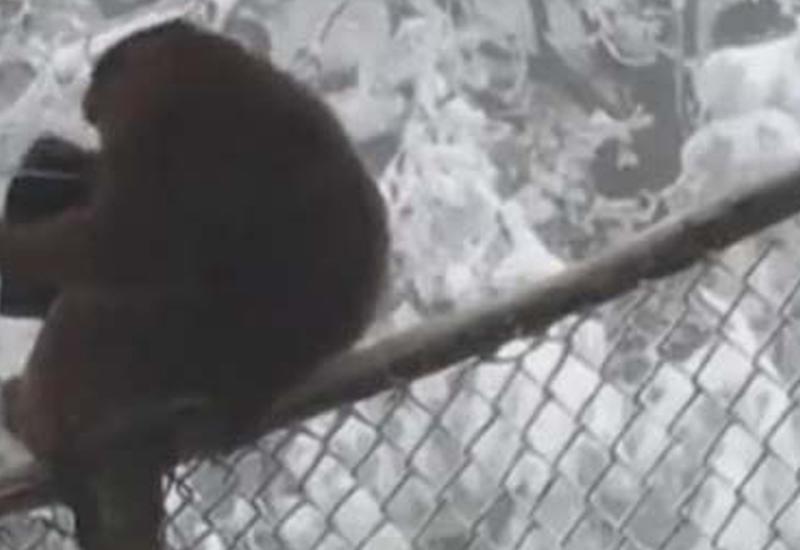 Решив полюбоваться на обезьян, турист лишился кошелька