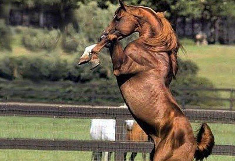 6 самых редких пород лошадей