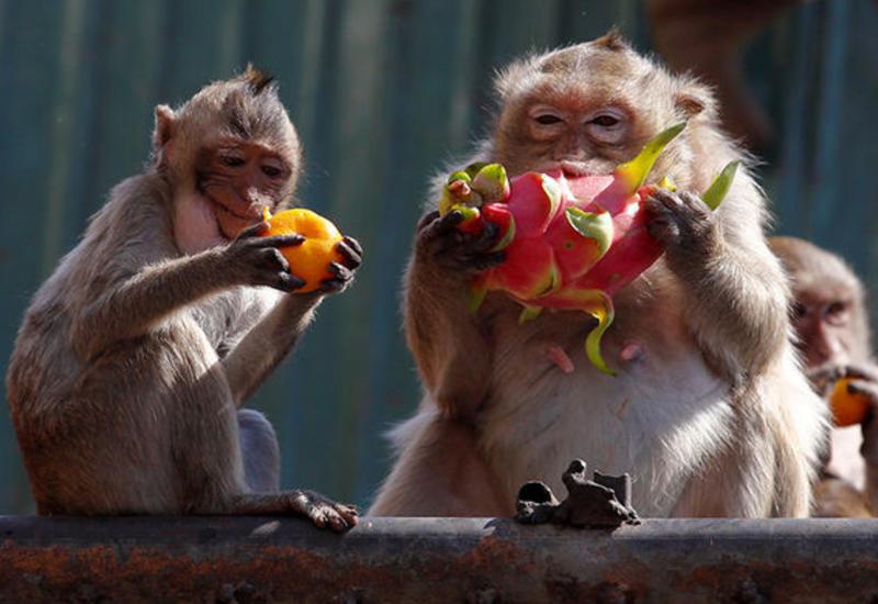 В России задержали автобус с 33 обезьянами