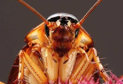 В России из уха 12-летней девочки достали живого таракана