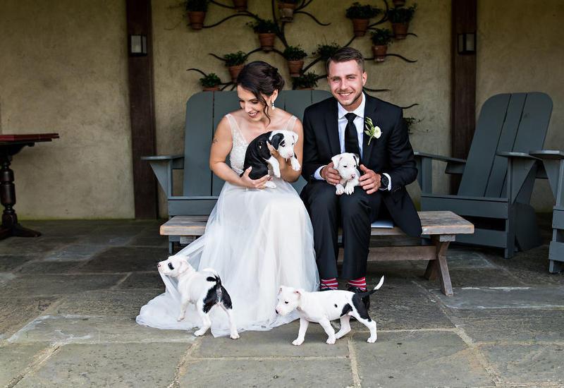 """Вместо цветов на этой свадьбе были спасенные щенята <span class=""""color_red"""">- ФОТО</span>"""