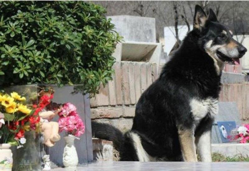 """Аргентинский Хатико, который 11 лет ночевал на могиле хозяина, умер рядом с ним <span class=""""color_red"""">- ФОТО</span>"""