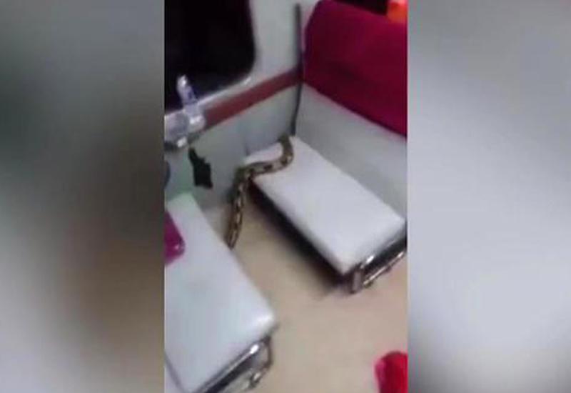 """Огромный питон в поезде вызвал панику среди пассажиров <span class=""""color_red"""">- ВИДЕО</span>"""