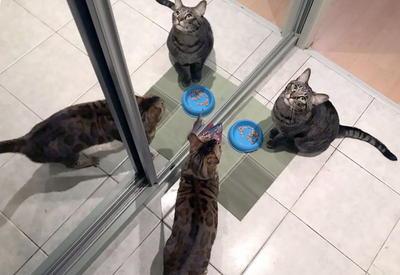 """4 канонических совета о том, как правильно кормить домашних котов <span class=""""color_red"""">- ФОТО</span>"""
