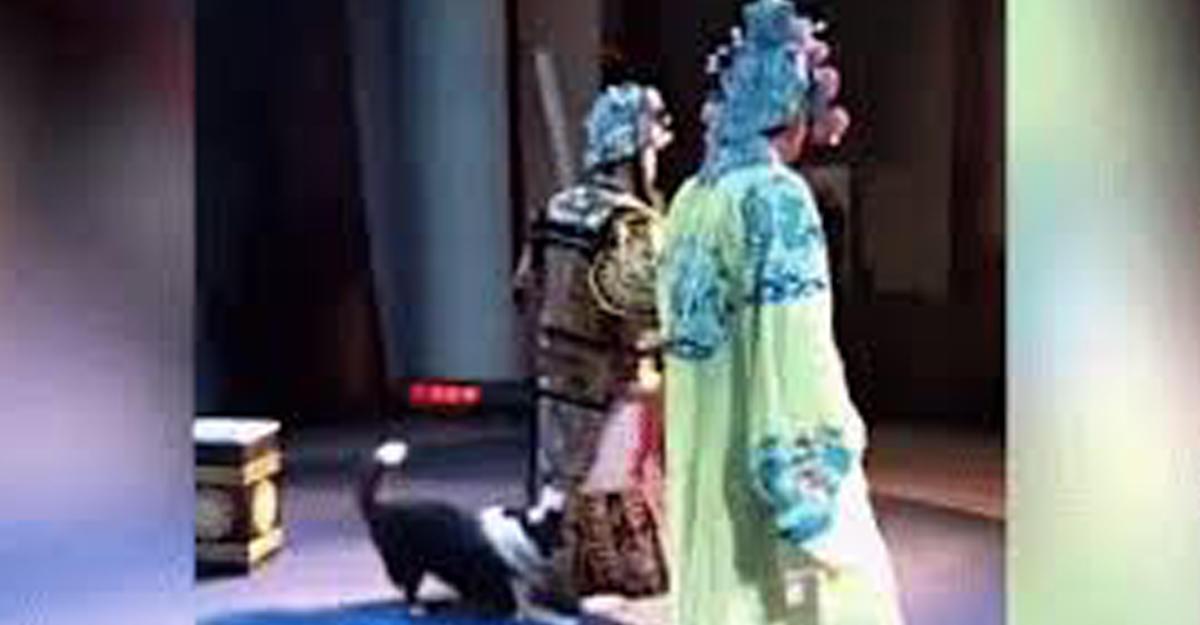 ВКитае выбежавшая насцену собака вцепилась вактера вовремя спектакля