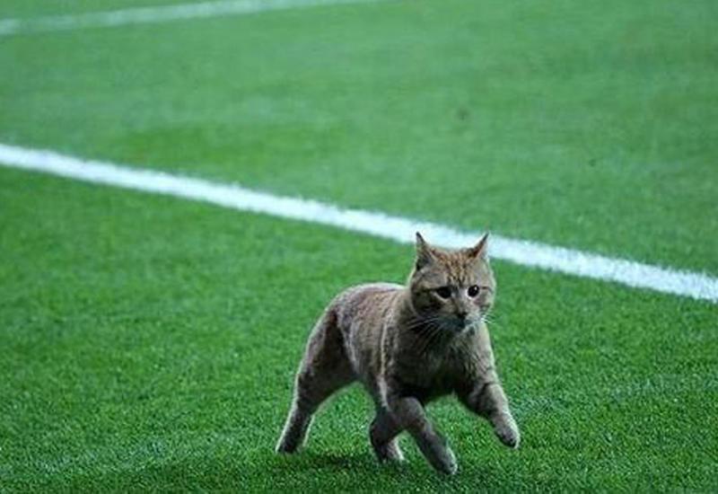 """""""Бешикташ"""" оштрафовали на €34 тысячи за кота, выбежавшего на поле во время матча"""
