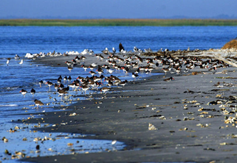 "На пляже в США нашли морского монстра <span class=""color_red"">- ФОТО</span>"