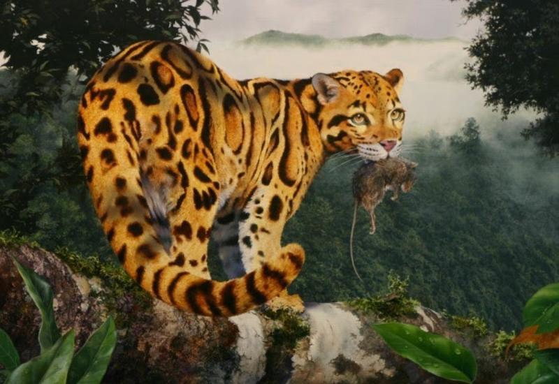 """""""Картинная галерея"""" Day.Az: Животные и пейзажи дикого мира"""