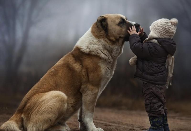 Как домашние животные влияют на ваших детей