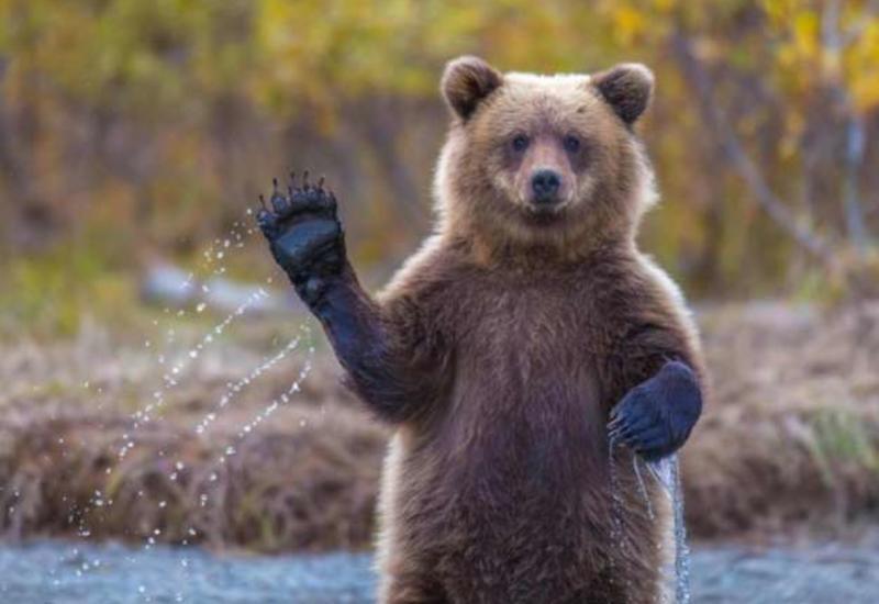 Власти Нью-Йорка опубликовали рекомендации на случай встречи с медведями