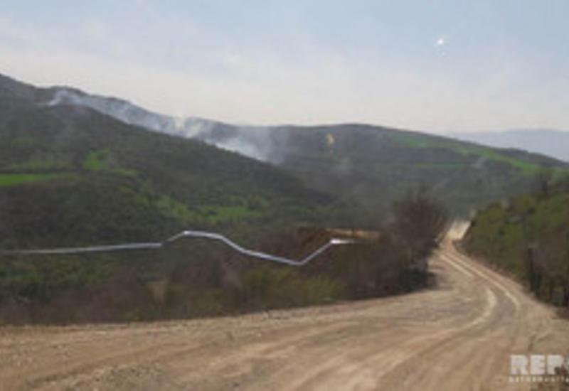 Пожар в лесном массиве в Губе потушен