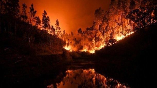 Площадь лесных пожаров Сибири возросла втрое