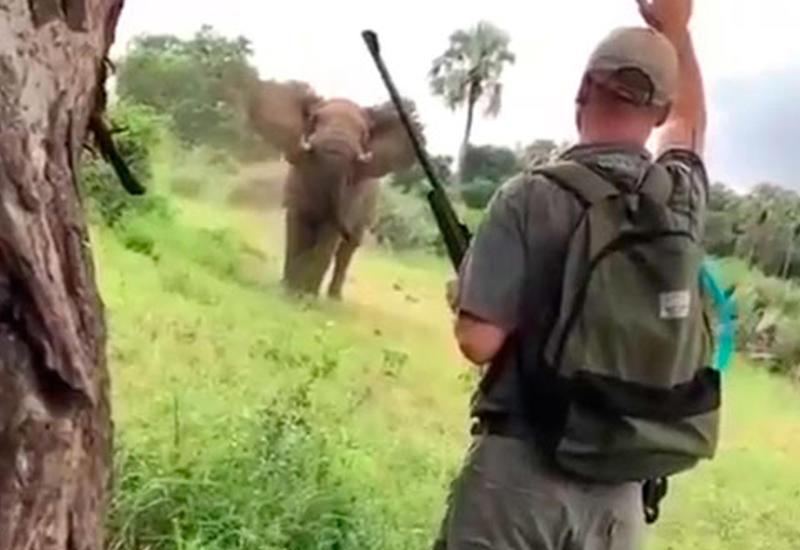Слон набросился на туристов во время сафари