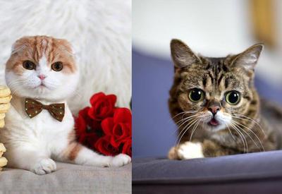 """Их любят все: топ-10 инстаграм-аккаунтов самых популярных котов и кошек <span class=""""color_red"""">- ФОТО</span>"""