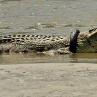 """В Мексике толпа бросила насильника в вольер с крокодилами <span class=""""color_red"""">- ОБНОВЛЕНО - ВИДЕО</span>"""