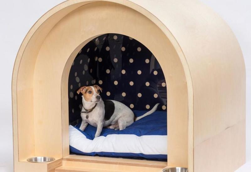 Известные архитекторы создали 20 домов для собак к благотворительному аукциону в Лондоне