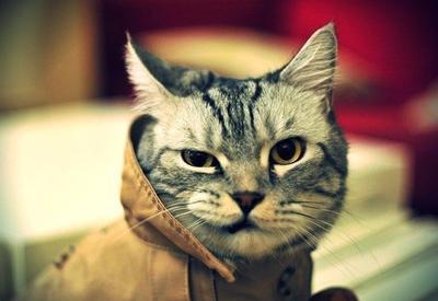 """Остолбеневший кот рухнул с ноутбуком и насмешил пользователей сети <span class=""""color_red"""">- ВИДЕО</span>"""
