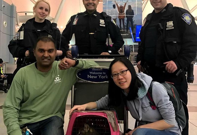 В аэропорту Нью-Йорка полиция неделю гонялась за сбежавшей кошкой