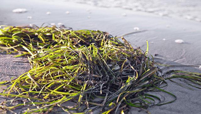 Ученые посоветовали изготовлять изводорослей 30 видов продукции