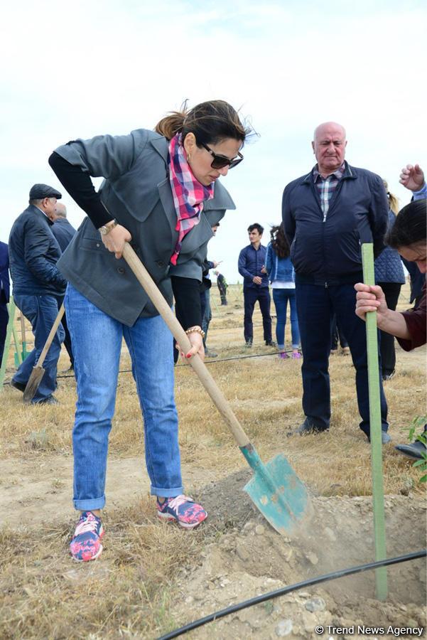 В Баку состоялась акция по посадке деревьев по случаю 25-летия создания ПЕА