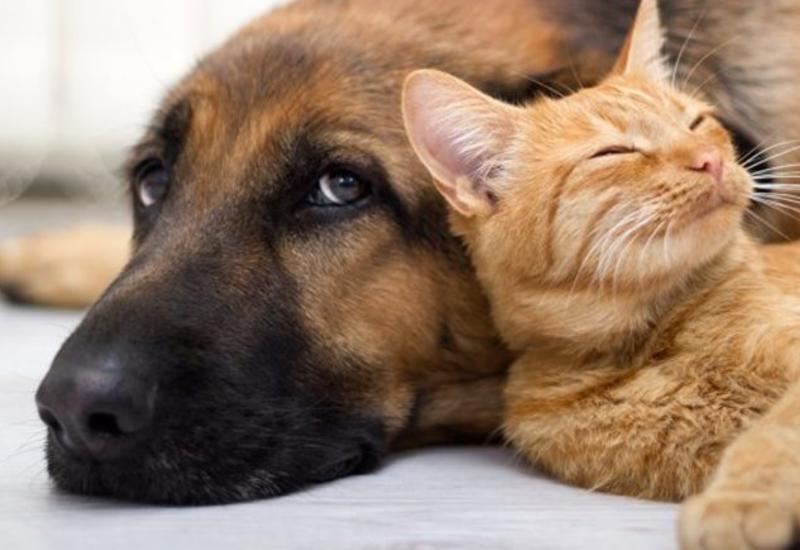 Ученые объяснили, с чем связана ревность собаки