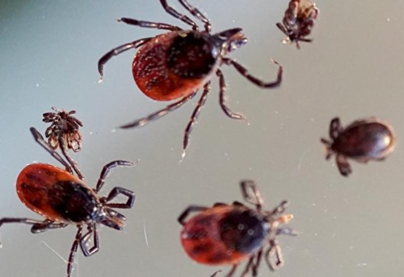 В России свирепствуют клещи: около 90 тысяч укушенных