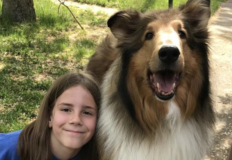 В США мальчик прославился, перегладив сотни собак