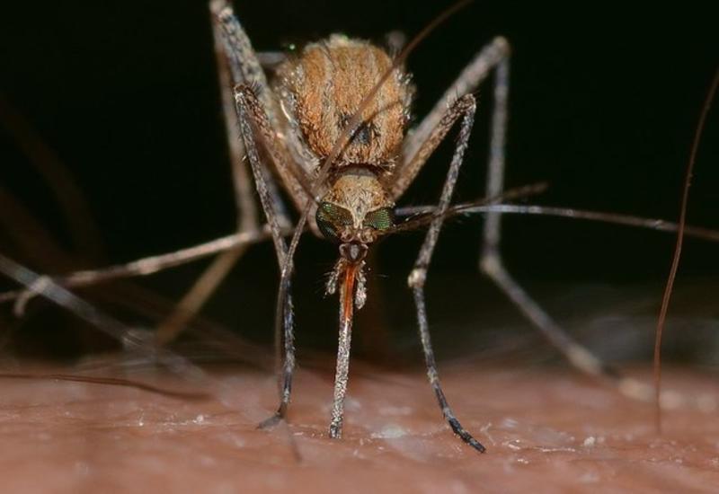 Несколько ароматов, которые отпугнут всех комаров от вашего дома