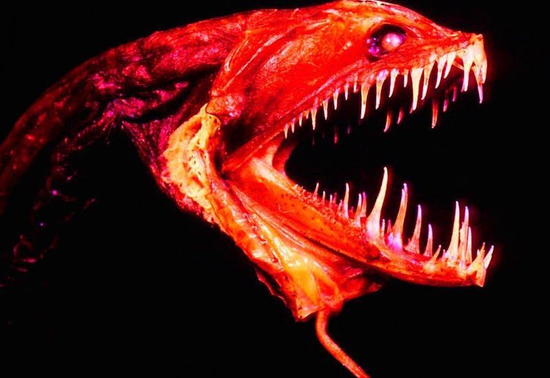 7 самых странных существ, проживающих на дне океана
