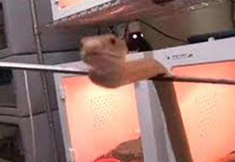 Видео с сидящей за стеклом змеей вызвало у пользователей Сети удивление и страх