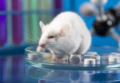 Британские ученые превратили самца мыши в самку