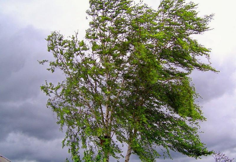 Güclü külək və leysan Ağsu və İsmayıllıda 500-dən çox ailəyə ziyan vurdu