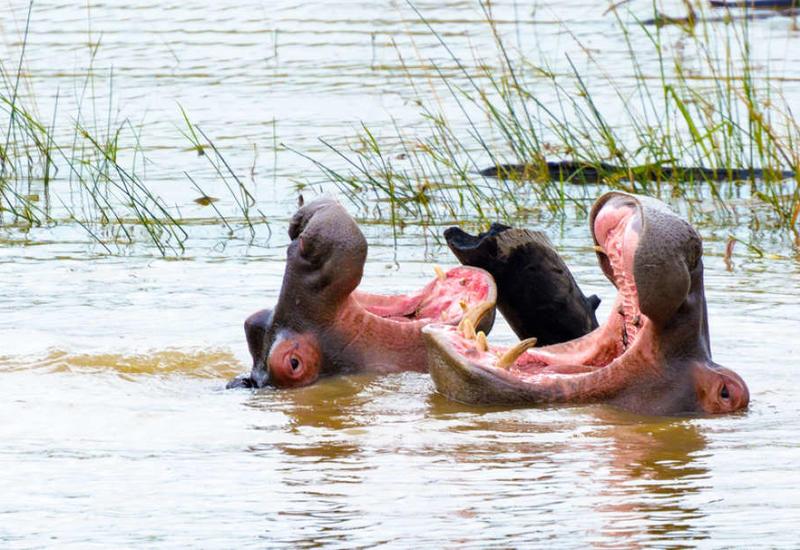 """Ученые выяснили, что животные могут вести вежливый """"диалог"""""""