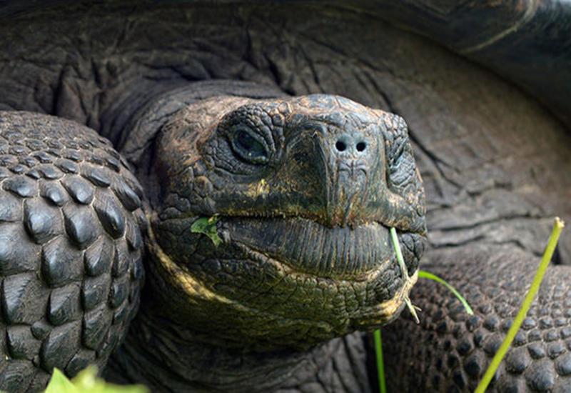 В Британии столетнюю черепаху нашли спустя неделю после побега