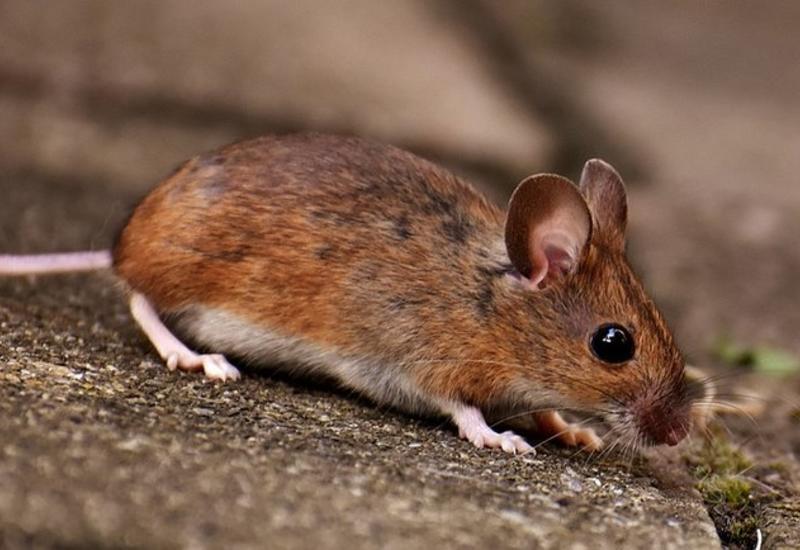 """Мыши пробрались в банкомат и съели больше миллиона <span class=""""color_red"""">- ФОТО</span>"""