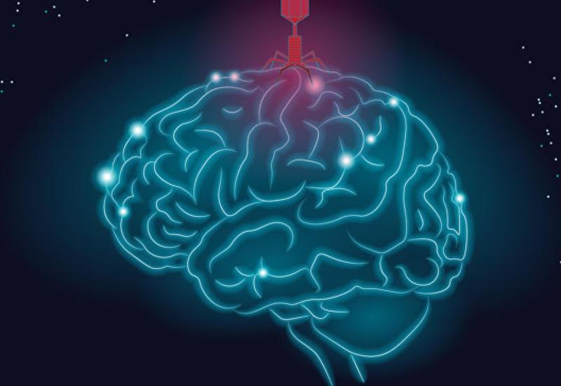 Найдена связь между болезнью Альцгеймера и герпесом