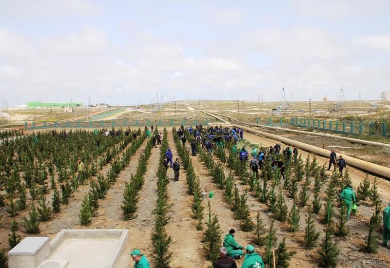 В Азербайджане желающие посадить деревья смогут бесплатно получить саженцы