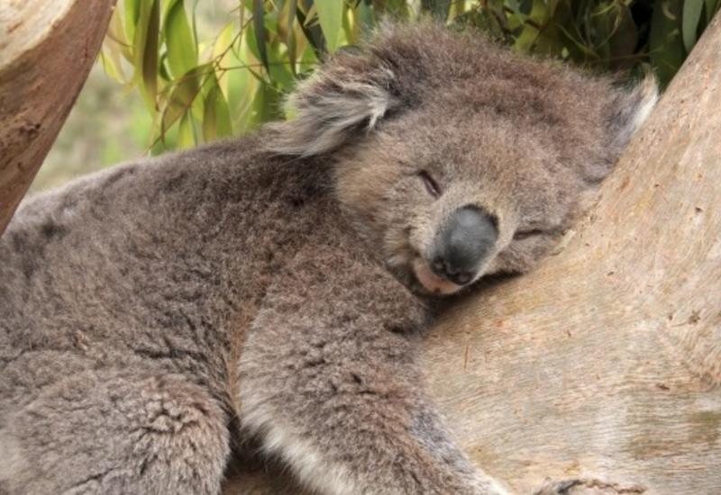 Занимательные факты о сне, которые вы, возможно, не знали