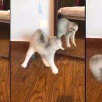 """Кошка, отстоявшая свою территорию у зеркала, стала интернет знаменитостью <span class=""""color_red"""">- ВИДЕО</span>"""