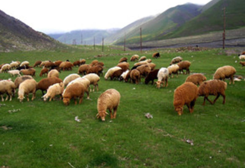 """В районах Азербайджана создадут ветеринарные пункты современного типа <span class=""""color_red"""">- ДЕТАЛИ</span>"""