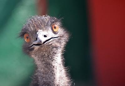 Грузинский политик попытался привести в суд страуса